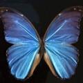 butterfly-67379_150