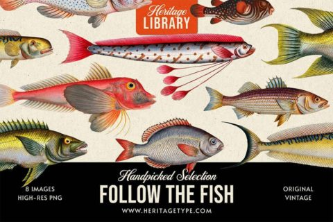 follow-the-fish.jpg