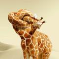 giraffe_neck_knot.jpg