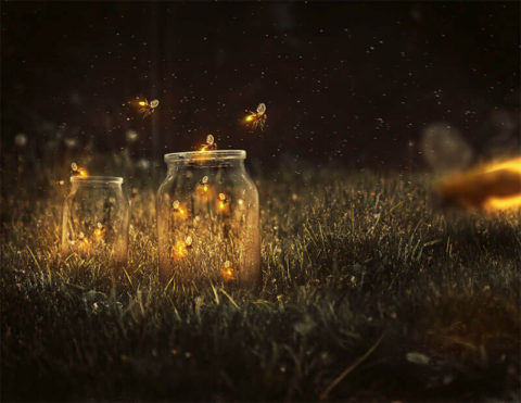 glowing-fireflies-photo-manipulation.jpg
