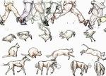 人間と動物の動きの違い参考用サムネイル