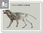 オオカミの骨格からの復元図サムネイル