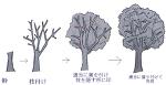 講座にもならない木の描き方サムネイル