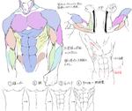 個人的筋肉の描き方サムネイル