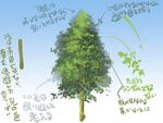【メモ】木を描く際に考えることサムネイル