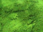 クリスタのデフォルトブラシを使った草原の描き方サムネイル