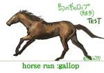 馬の走り方:ギャロップ(襲歩)サムネイル