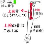 #OEKAKI SUPPLEーX (腕の追加-1...サムネイル