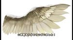 翼の描き方メイキングサムネイル