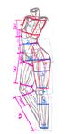 标准人体比例数据分析及转折节点サムネイル
