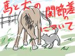 馬と犬の関節の違いについてサムネイル